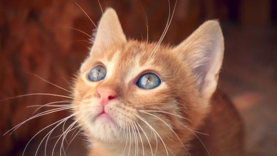 目の前を飛んでいる蝶に見入る子猫の画像